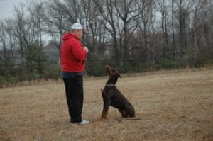 Dog Training k9 doberman
