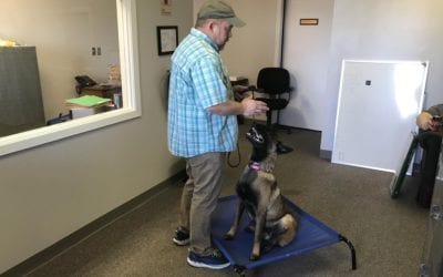 What does a day in the life at West Tennessee K9 look like?