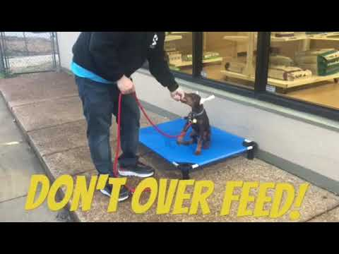 Rules for a well trained puppy