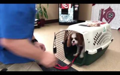 Teaching a pup to kennel